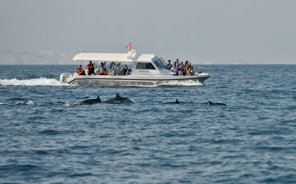 Go on a dolphin watching trip in Oman