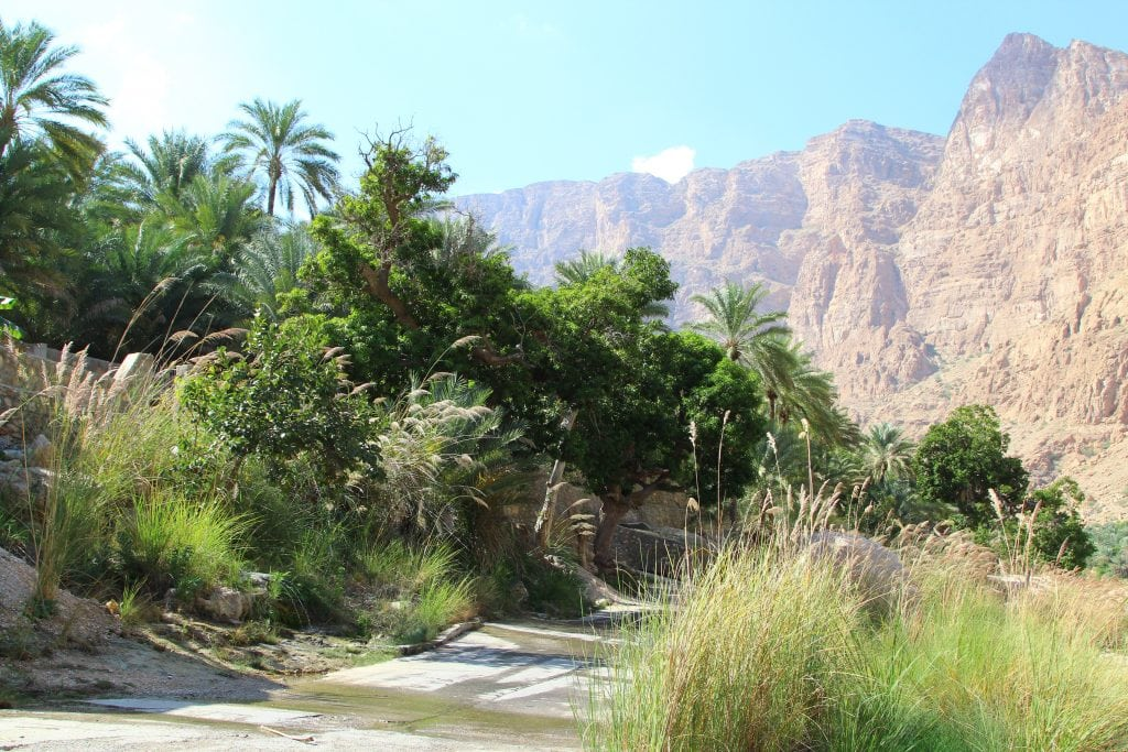 Plants at Ash Sharqiyah Wadi Tiwi 71