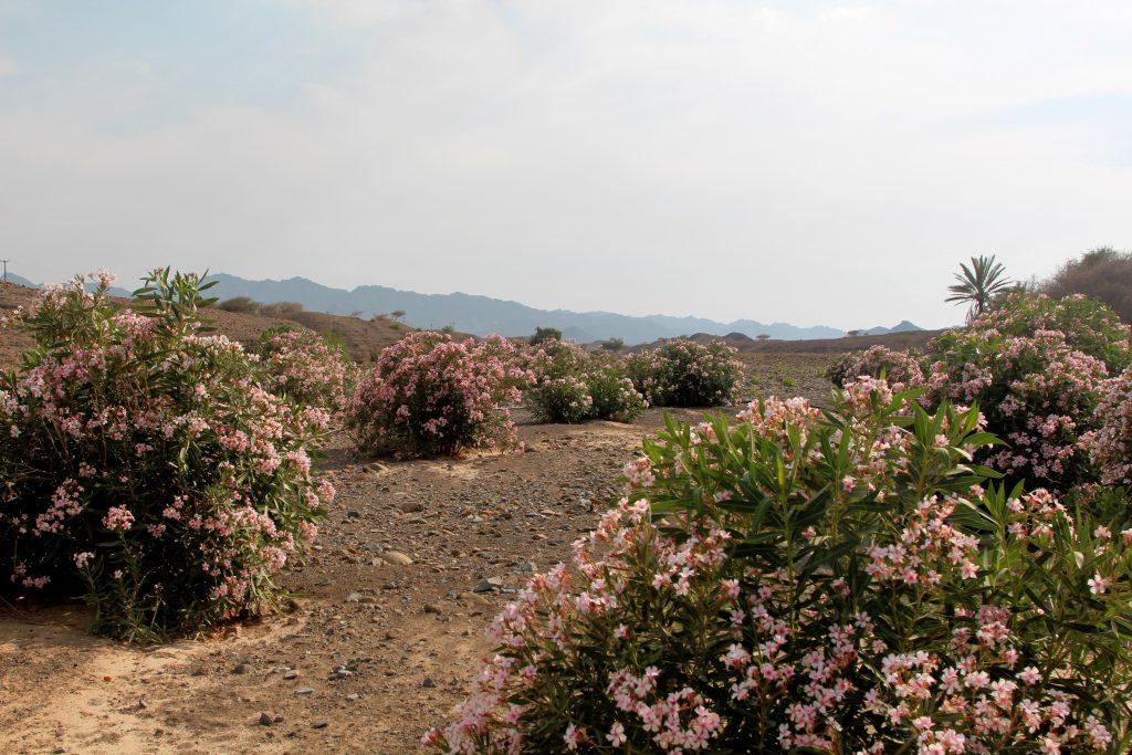Wadi Jizzi 001a